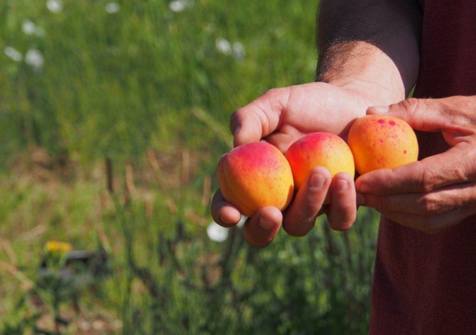 Nos pêches nectarines et abricots labellisés Zéro Résidu de Pesticides