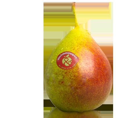 Poire Qtee - Poires Fruits & Compagnie